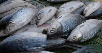 Kiat Sukses Budi Daya Ikan Lele Oleh Endah Nur Fatimah tips jitu budidaya ikan bandeng air tawar