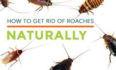 silverfish how to get rid and cricket on