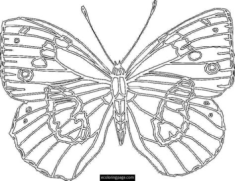 coloring pages of big butterflies 8 best images of large printable coloring sheets elsa