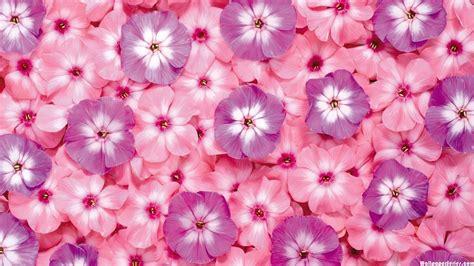 wallpaper kawaii flower cute flower backgrounds wallpaper 1405000