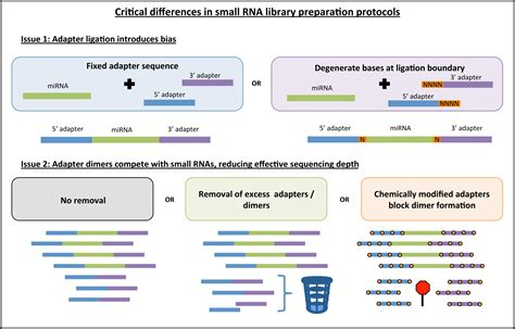 illumina rna seq frontiers addressing bias in small rna library