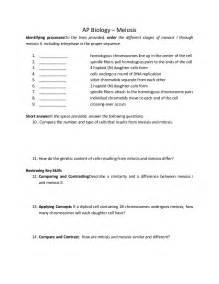 meiosis worksheet answers key worksheets for school