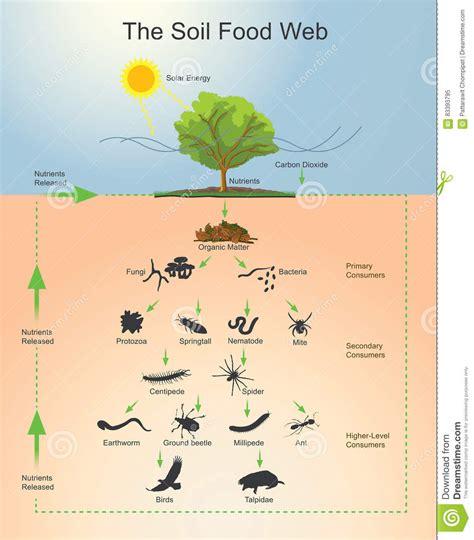 la catena alimentare degli animali la catena alimentare suolo illustrazione di stock