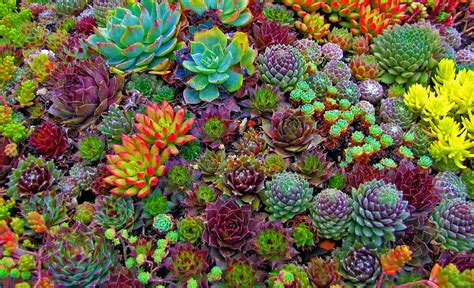 succulents plants what are terrariums floralis ic