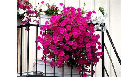idee balconi fioriti balconi fioriti benvenuta primavera