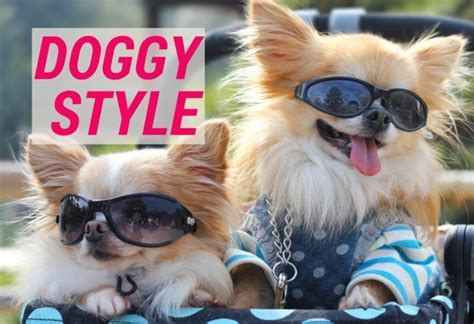 doggy style doggy style japan s most pered pooches the culture map