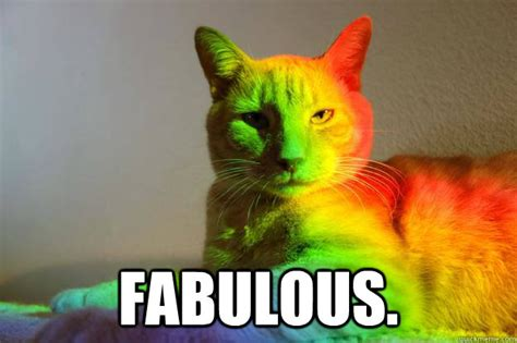 Gay Cat Meme - fabulous gay cat quickmeme