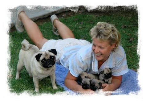 pugs queensland about raevon pugs and showing world class pugs in melbourne