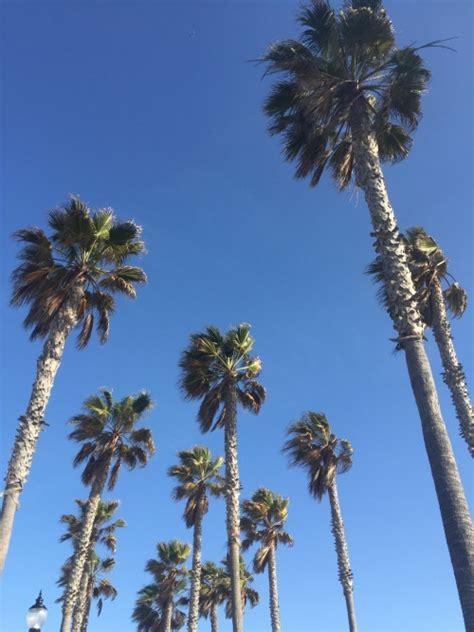 huntington beach christmas lot tree huntington palm trees