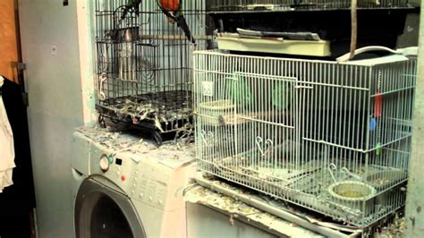 arc saves 140 birds from exotic bird mill in tn youtube