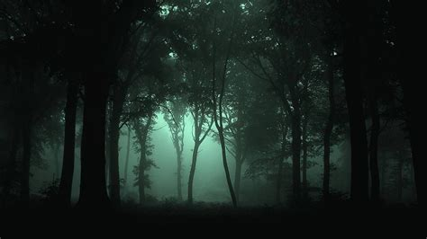 darkness beautiful dark themes dark forest wallpapers wallpaper cave