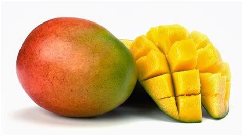 Jual Bibit Buah Cangkokan jual bibit tanaman buah mangga