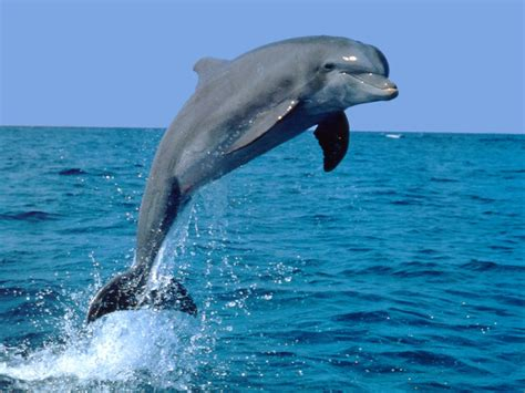 Google Images Dolphins | dolphin look like strange google earth maps