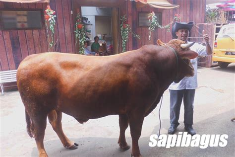 Jual Bibit Kaliandra Di Bogor profil