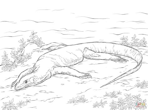Monitor Lizard Coloring Pages | reptile coloring pages realistic coloring pages