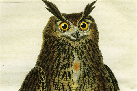 illuminati owls 9 questions about the illuminati you were afraid to