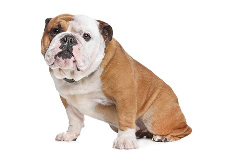 for my awesome bulldogs infinity 125 bulldog names that are totally awesome my s name
