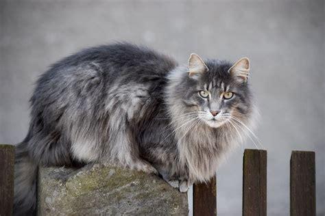 wann werden katzen geboren wann sind katzen ausgewachsen katzenkram