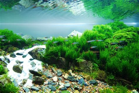 Www Aquascape by Les Mousses Aquatiques