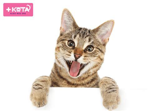 imagenes uñas gatos c 195 179 mo cortar las u 195 177 as del gato maskota amor para tus