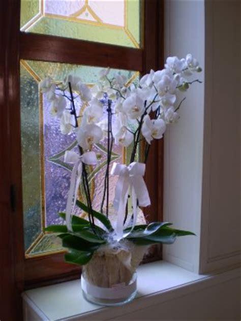 vasi per orchidee ikea grande orchidea gipsy fiori fiori alessandria