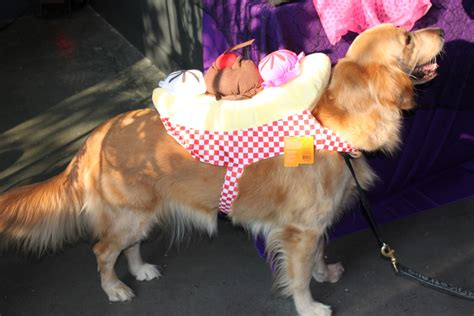 golden retriever costume the pet costumes this year business insider
