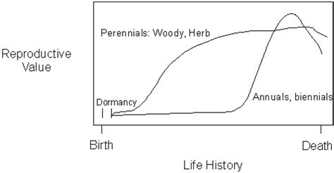 life history pattern and resource allocation plant age
