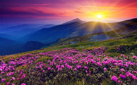 flower valley 1280 800 wallpaper open beautiful valley full of pink and purple flowers