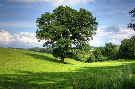 oaks landscaping free stock photo tree oak landscape view field free image on pixabay 402953