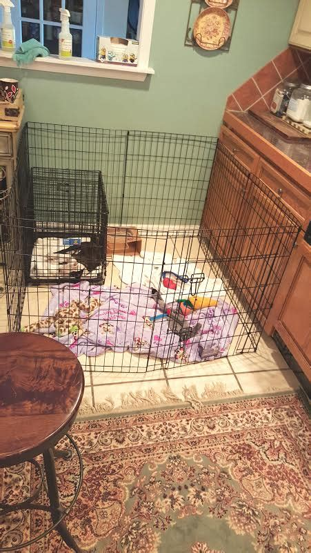 puppy potty regression puppy crate regression dogs in our photo