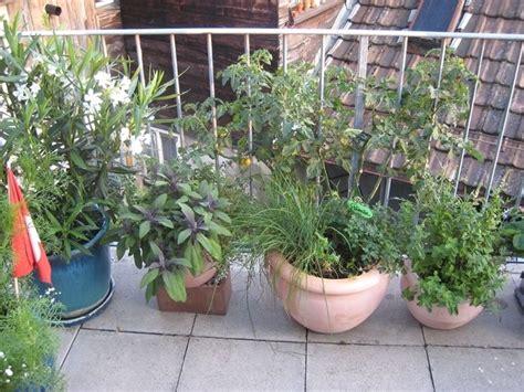 vasi da terrazzo vasi da terrazzo vasi per piante tipologie vaso