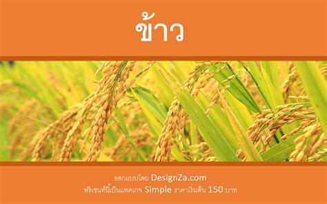 ppt templates for rice แจกธ ม powerpoint quot rice quot สำหร บพร เซนท เร องข าว