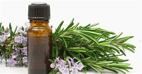 Minyak Kayu Putih Kecil manfaat dan khasiat minyak kayu putih