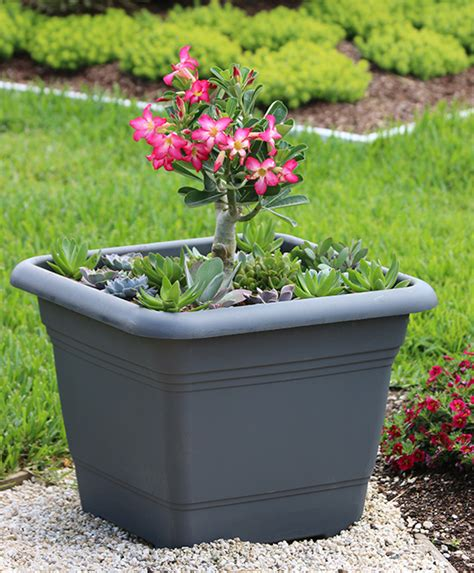 desert container gardening cool container gardens from the costa farms team costa farms