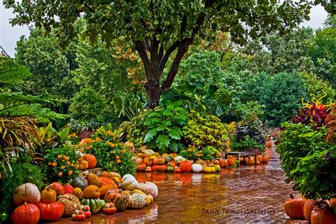 autumn garden autumn garden jana king james jpg 900 215 600 pixel