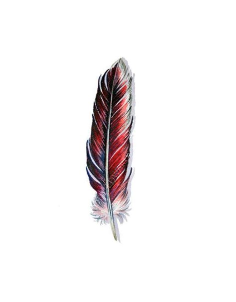 cardinal feather tattoo 26 best images about cover up ideas on