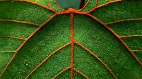 Wallpaper Patterns by Nature Macro Leaves Pattern Lines Wallpapers