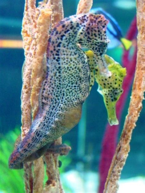 seahorse colors the world s catalog of ideas
