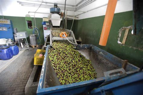 frantoio da casa come funziona un frantoio oleario trasforma olive in