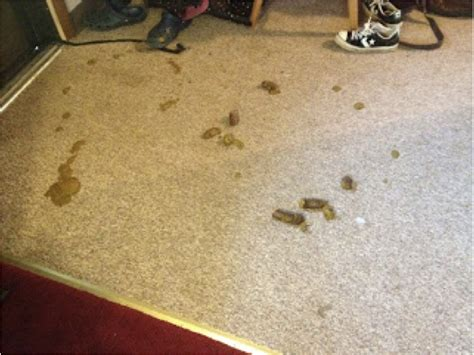 pic of diarrhea on the floor living with humans