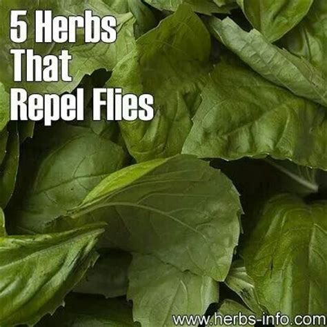 herbs that repel flies helpful tips pinterest