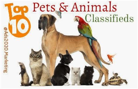 best place to sell puppies animals for sale 10 best pet classifieds of 2018 to buy sell pets ads2020