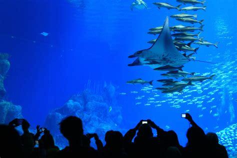 photos de chine le plus grand aquarium du monde chine informations