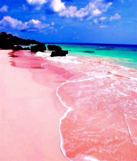 beaches with pink sand 36 best images about bahamas on pinterest vacation