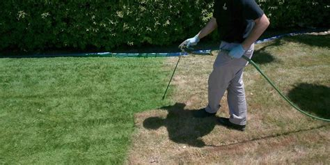spray paint yard painting lawn green drought lawn care