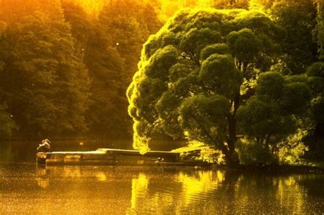 world  beautiful trees photography   fun