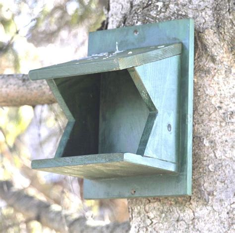 american robin bird house plans plans diy how to make