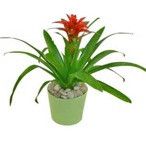 Indoor Flower Plants by Indoor Potted Plants Flowers Viewing Gallery