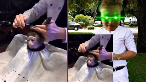 Monkey Getting Haircut Meme