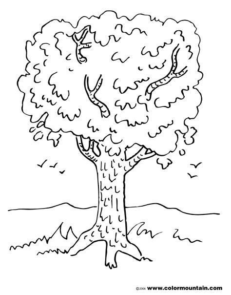 coloring page of maple tree maple tree coloring page create a printout or activity